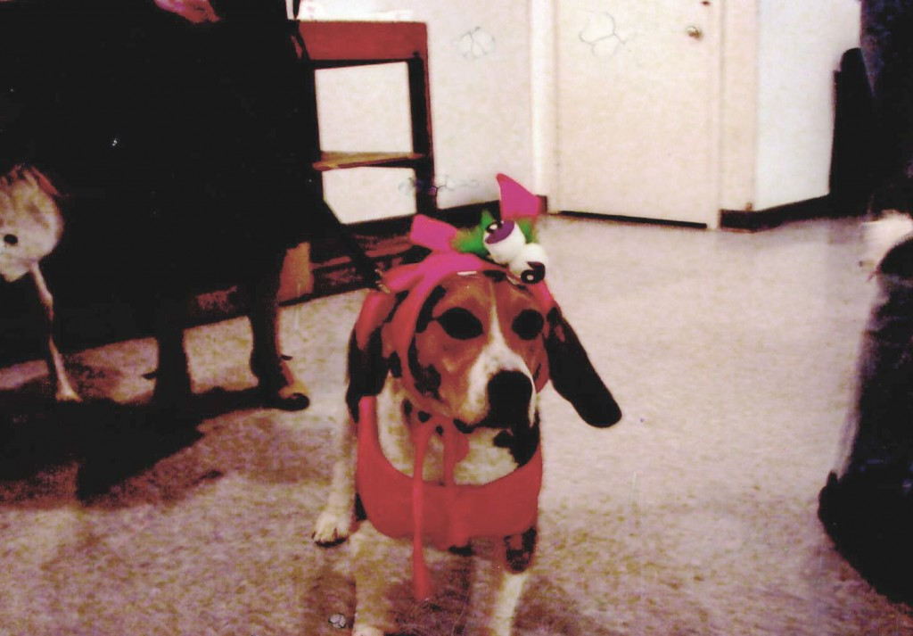 Beagle in Halloween costume